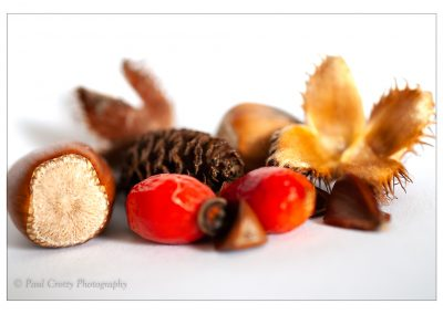 Beech, Rose hip Acorn and cone