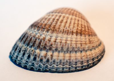 Shell (1 of 3)