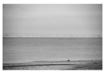 The Wind Farm Mono