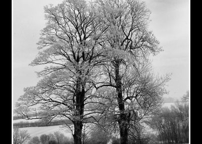 2 winter trees