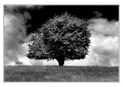 Bibury Tree Mono
