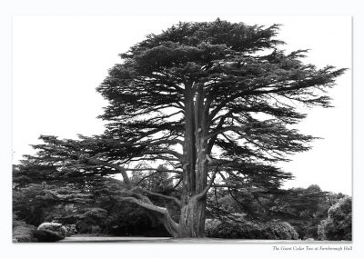 Cedar Tree Farnborough Hall Mono