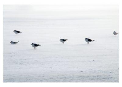 Gulls in Winter2010 (1 of 1)