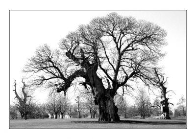 Harlestone Trees