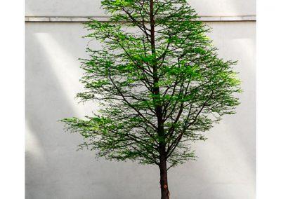 Leadenhall tree