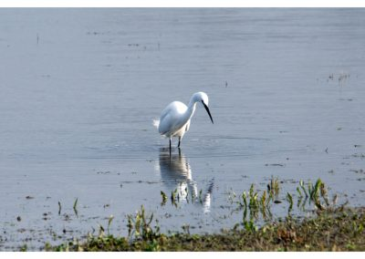 Little Egret 21 3 19 (1 of 1)