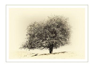 Tree above Dovedale-Mono