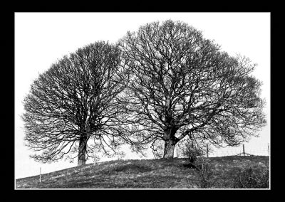 Two Trees Lathkill Dale
